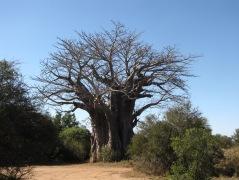 Kruger Park_south Africa
